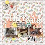 HOTcatssmall.jpg